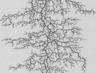 CO2-Speicherbooster Artenvielfalt und heimische Pflanzen